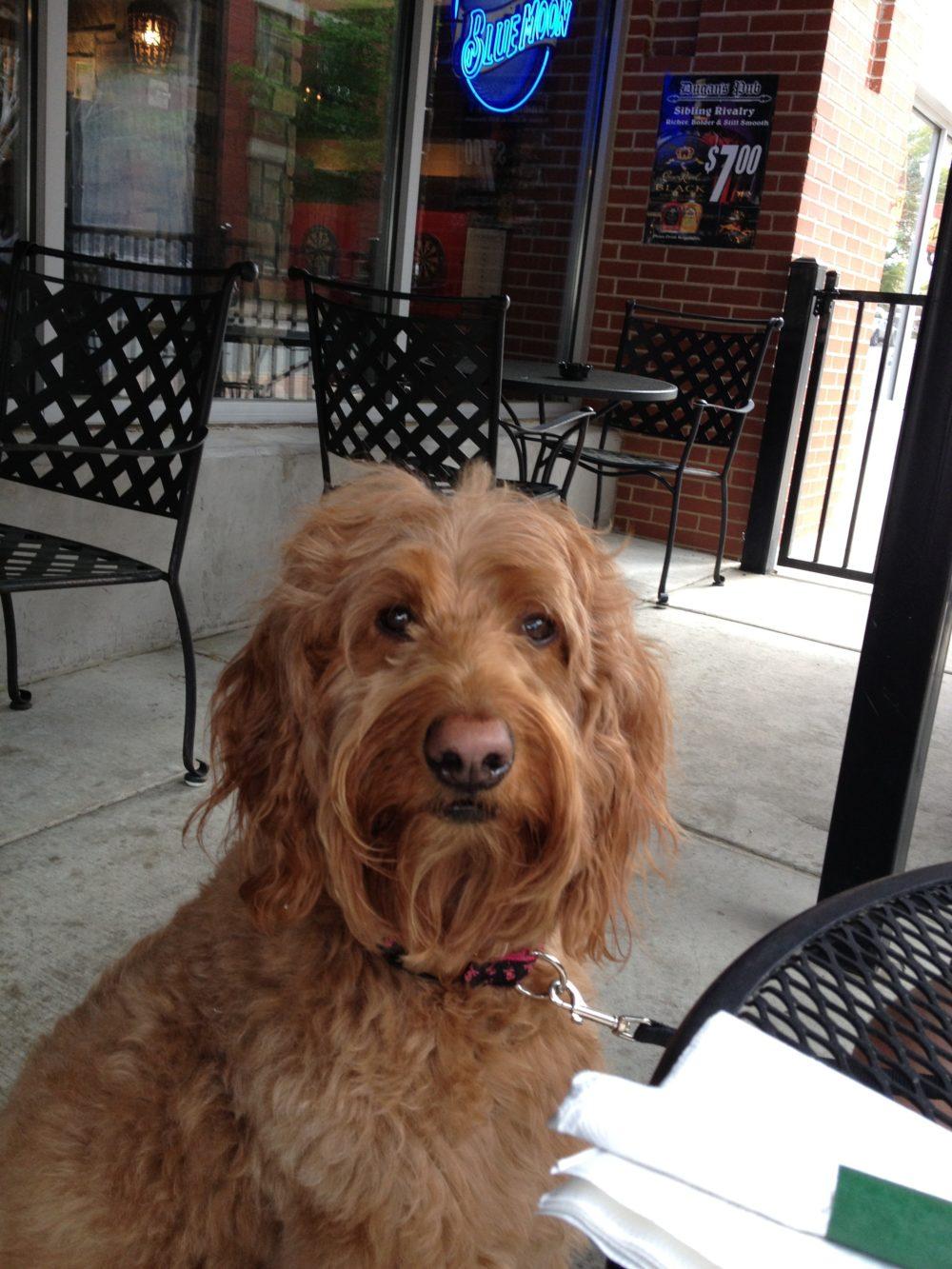 Dog Friendly Little Rock